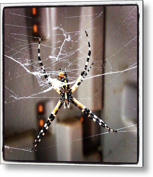 Metal Print featuring the photograph Banana Spider by Dana Coplin