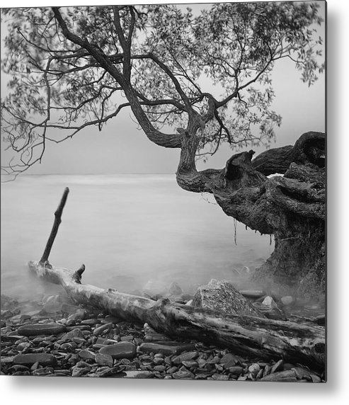 Tree Metal Print featuring the photograph Black And White Mystic Lake by Andre Distel