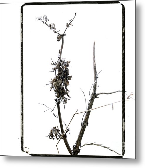 Worms-eye Metal Print featuring the photograph Branch Of Dried Out Flowers. by Bernard Jaubert
