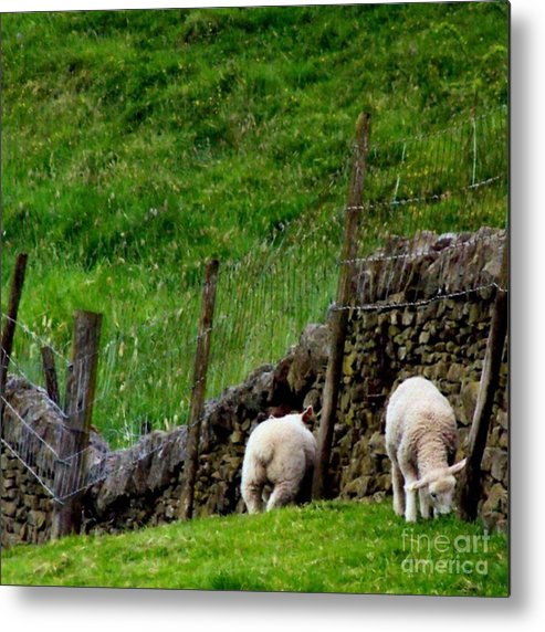 Lamb Metal Print featuring the photograph British Lamb by YoursByShores Isabella Shores