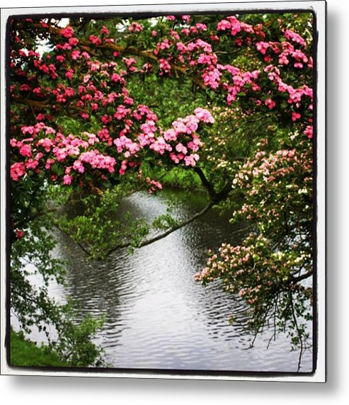 Metal Print featuring the photograph Chatsworth Tree by Chris Jones