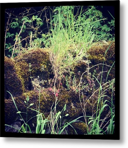 Metal Print featuring the photograph Derbyshire Hedgerow by Chris Jones