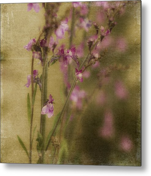 Raindrops Metal Print featuring the photograph Dewdropped Garden by Bonnie Bruno