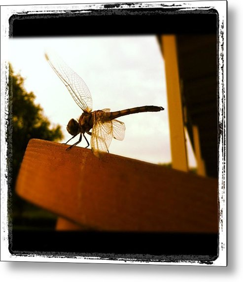 Metal Print featuring the photograph Dragon Fly by Dana Coplin