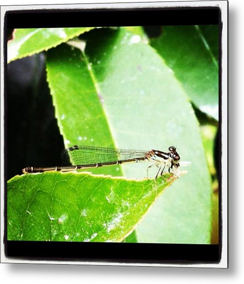 Metal Print featuring the photograph Dragonfly by Dana Coplin