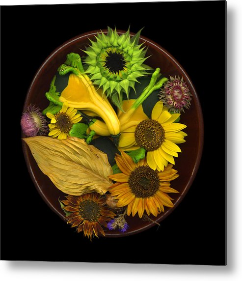 Sunflower Metal Print featuring the photograph Fall Colors by J Arthur Davis