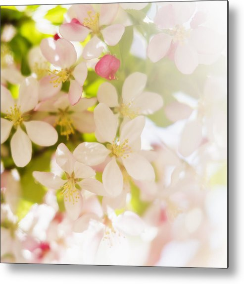 Square Metal Print featuring the photograph Flower Blossoms by Tetra Images