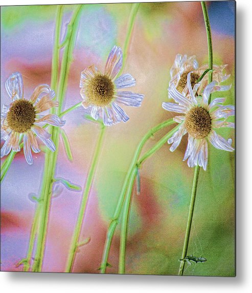 Daisies Metal Print featuring the photograph Good News by Bonnie Bruno