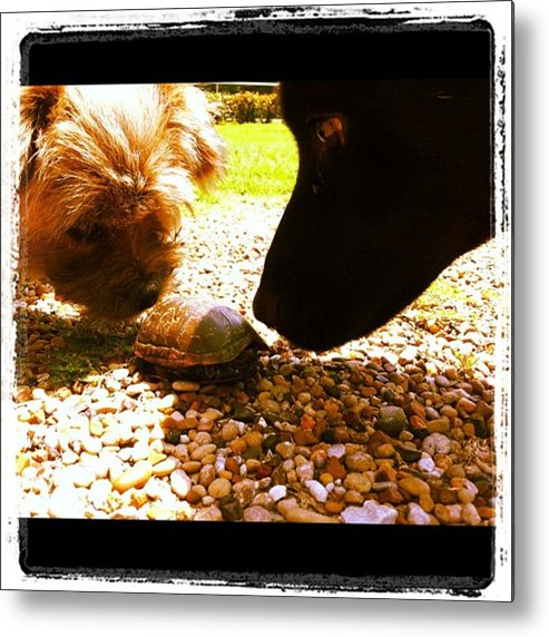 Metal Print featuring the photograph It Does Not Smell Like A Turtle by Dana Coplin