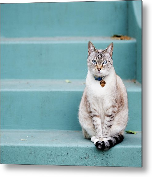 Square Metal Print featuring the photograph Kitty On Blue Steps by Lauren Rosenbaum