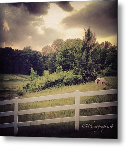 Beautiful Metal Print featuring the photograph Love This Photo Of A #horse On A #hill by Pete Michaud