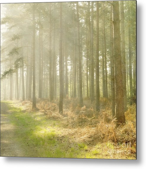 Misty Metal Print featuring the photograph Misty Sunrise by Paul Grand