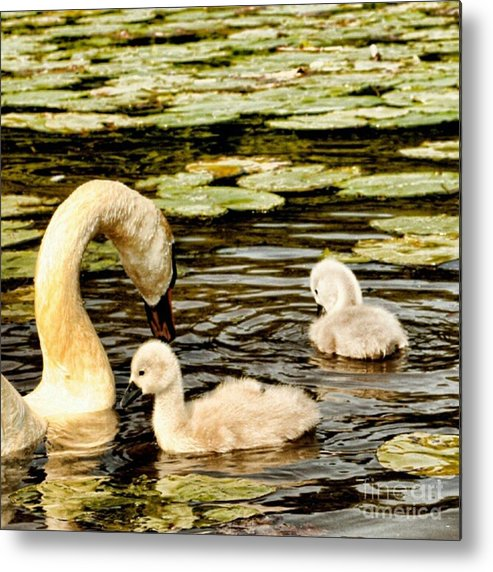 Lily Metal Print featuring the photograph Mothers Love by Isabella F Abbie Shores FRSA