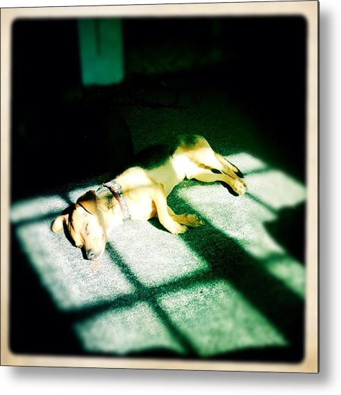 Metal Print featuring the photograph My Little Nuff Stretch 🐶 by Nena Alvarez