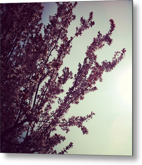 Pink Metal Print featuring the photograph Pinks And Blues by Andreia Gomes