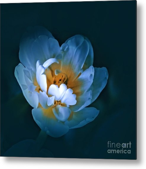 Nature Metal Print featuring the photograph Radiance by Gerlinde Keating - Galleria GK Keating Associates Inc