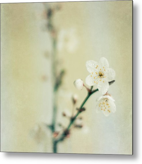 Square Metal Print featuring the photograph Signs Of Spring by Jill Ferry