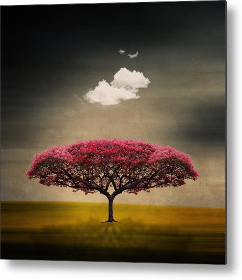 Square Metal Print featuring the photograph Tree And Clouds by Philippe Sainte-Laudy Photography