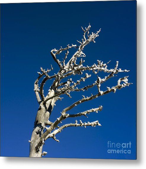 Wintry Metal Print featuring the photograph Tree In Winter Against A Blue Sky by Bernard Jaubert