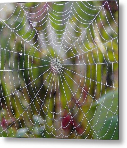 Spider Web Metal Print featuring the photograph Web Design by Doris Potter