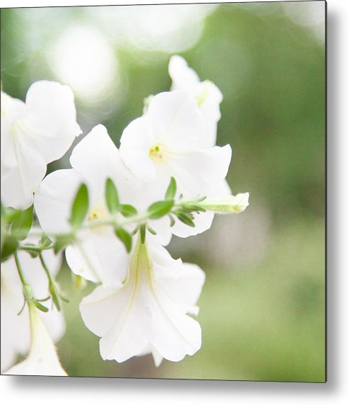 Square Metal Print featuring the photograph White Flowers In Summer by Peter Chadwick LRPS