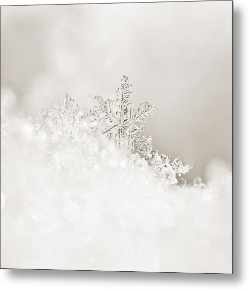 2011 Metal Print featuring the photograph White Snowflake by Beth Riser