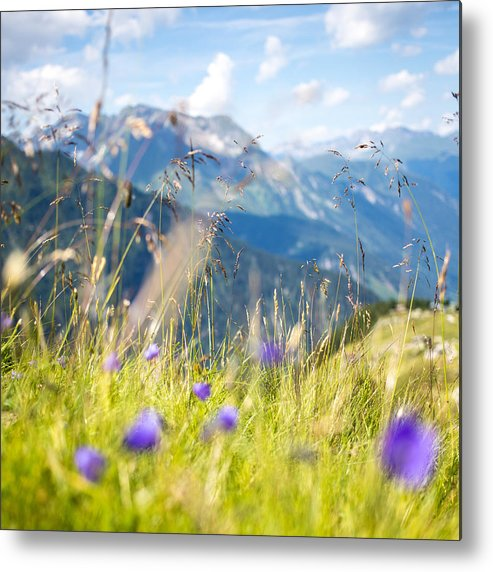 Square Metal Print featuring the photograph Wild Flower And Grass by Torsten Muehlbacher