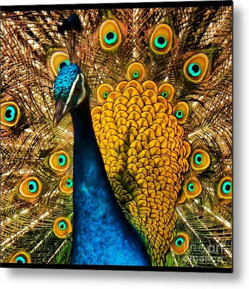 Bird Metal Print featuring the photograph Yellow Peacock by Phil Huettner