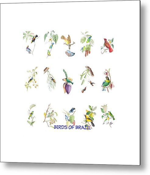 Tropical Metal Print featuring the painting Birds Of Brazil by Philip Ralley