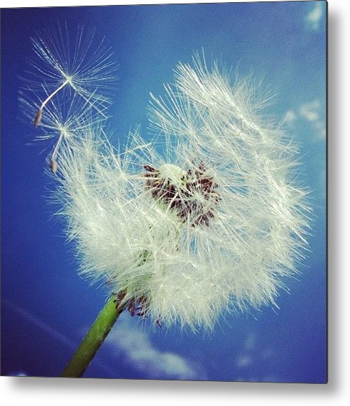 Dandelion Metal Print featuring the photograph Dandelion And Blue Sky by Matthias Hauser