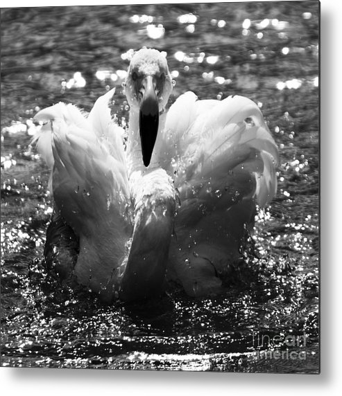 Flamingo Metal Print featuring the photograph In The Water by Angel Ciesniarska