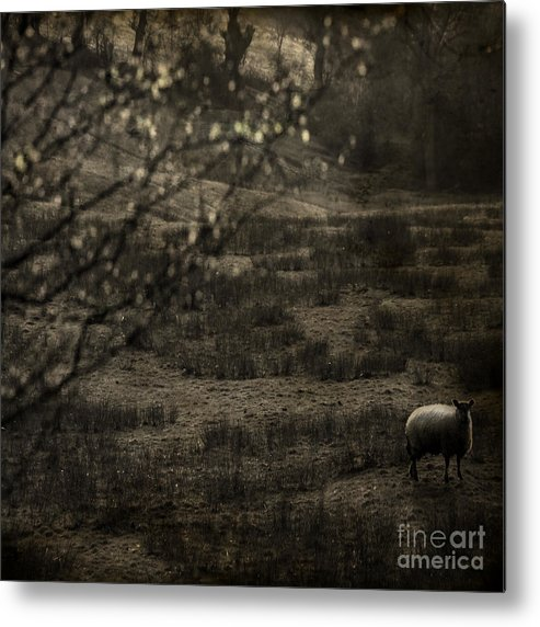 Easter Metal Print featuring the photograph The Countryside by Angel Ciesniarska