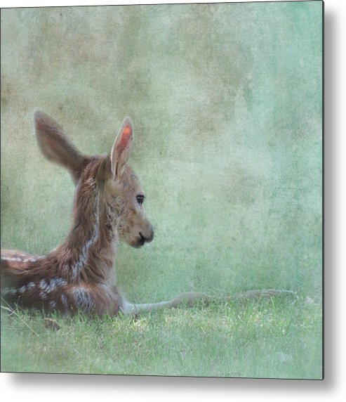 Fawn Metal Print featuring the photograph Tranquil by Sally Banfill