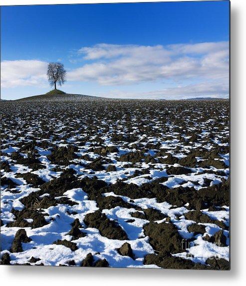 Agriculture Metal Print featuring the photograph Winter Tree. by Bernard Jaubert
