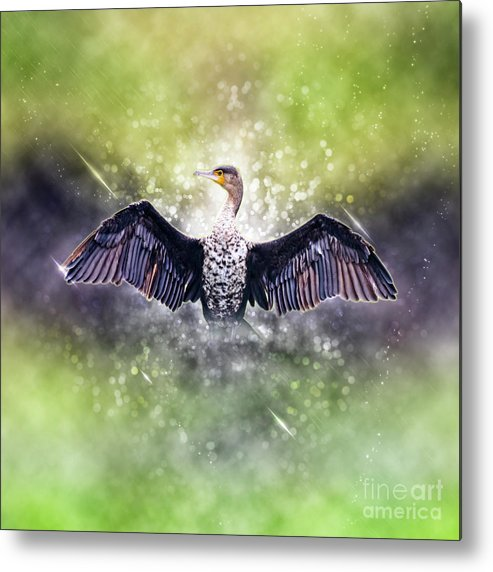 White Breasted Metal Print featuring the photograph Cormorant Dries Its Wings by Humorous Quotes