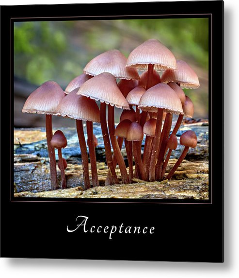 Inspiration Metal Print featuring the photograph Acceptance 4 by Mary Jo Allen