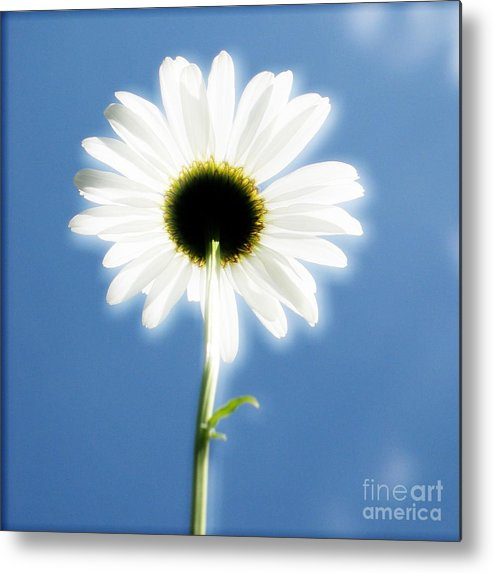 Daisy Metal Print featuring the photograph Achievement by Idaho Scenic Images Linda Lantzy