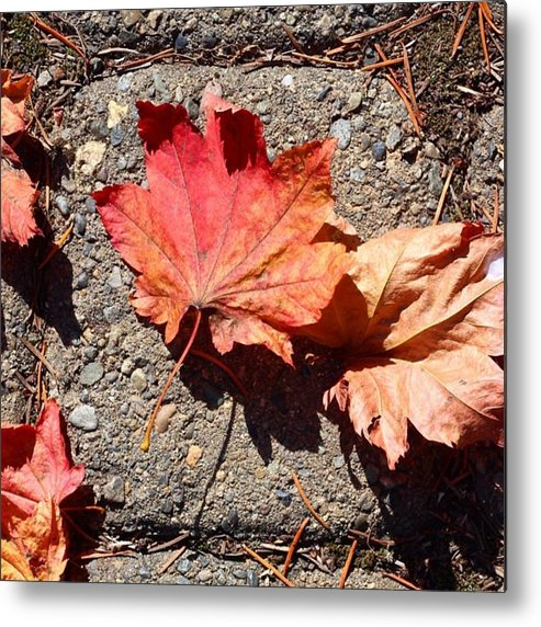Leaves Metal Print featuring the photograph Autumn Is Here by Blenda Studio