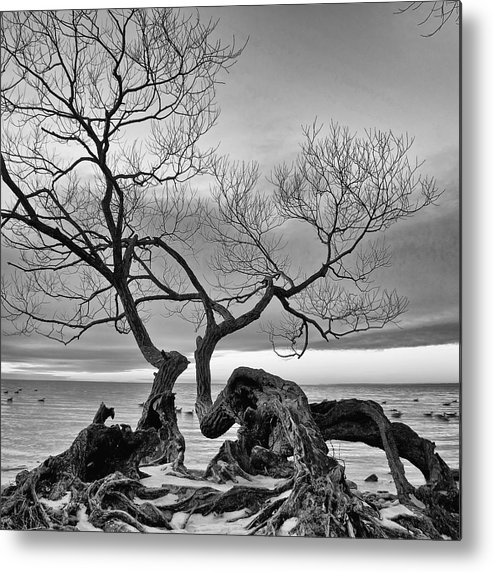Lake Ontario Metal Print featuring the photograph Black And White Tree by Andre Distel