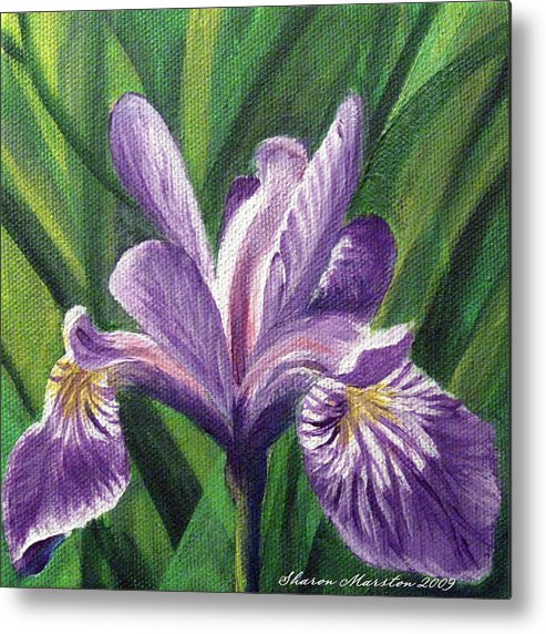 Blue Flag Iris Metal Print featuring the painting Blue Flag Iris by Sharon Marcella Marston