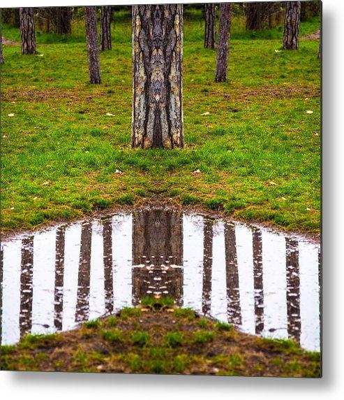 Forest Metal Print featuring the photograph bois de Boulogne, Paris by Emiri MAEDA