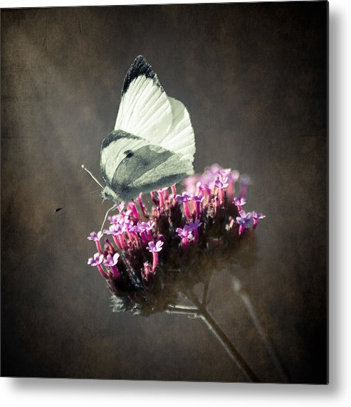Loriental Metal Print featuring the photograph Butterfly Spirit #02 by Loriental Photography