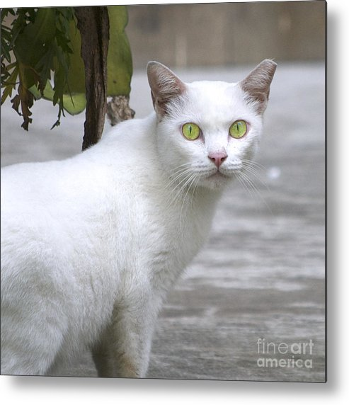 Cat Metal Print featuring the photograph Cat Eyes by Mark Stevens