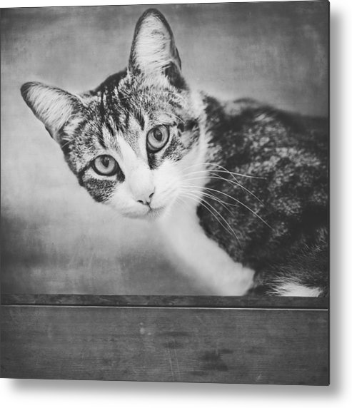 Cat Metal Print featuring the photograph Cat Portrait 4 by Wolf Shadow Photography
