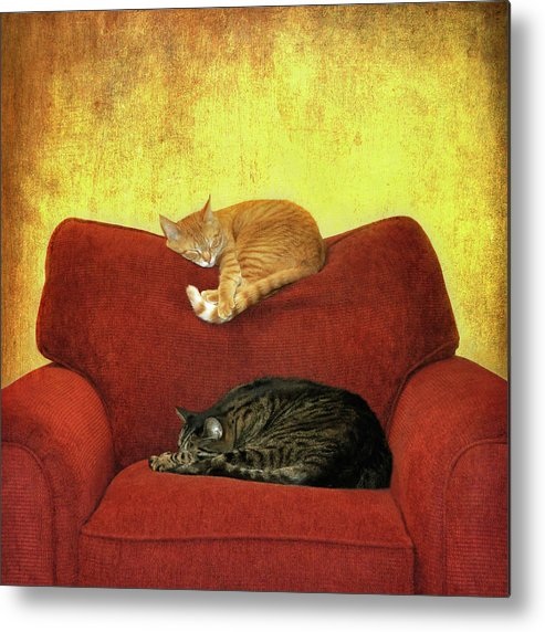 Square Metal Print featuring the photograph Cats Sleeping On Sofa by Nancy J. Koch, Pittsburgh, PA