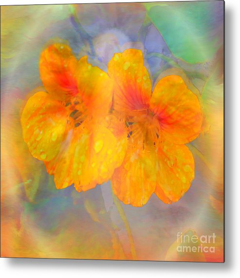 Nasturtiums Metal Print featuring the painting Celebration Of Life. by Glenyss Bourne