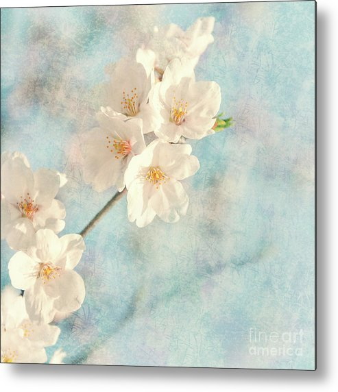 Cherry Blossom Metal Print featuring the mixed media Cherry Tree Blossom by Delphimages Photo Creations