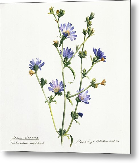 Chicory Metal Print featuring the painting Chicory by Attila Meszlenyi
