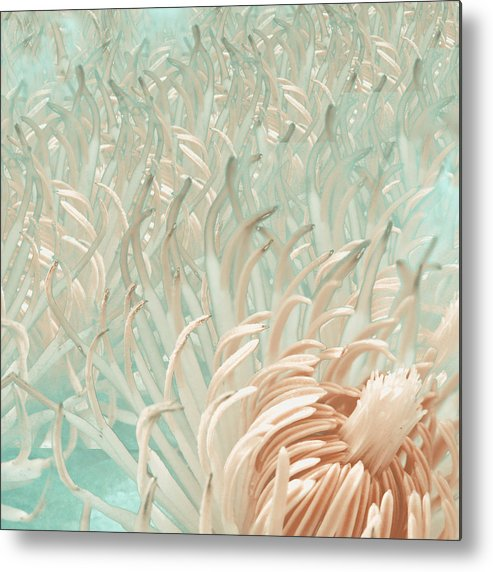 Metal Print featuring the photograph Clematis Center - Retro Abstract by K Bella Flora Images