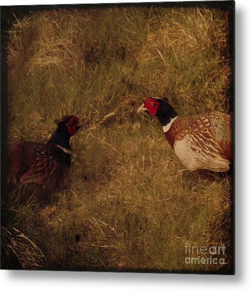 Pheasant Metal Print featuring the photograph Conversations by Angel Ciesniarska